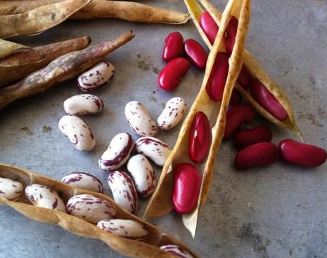 blog-fresh shelling beans