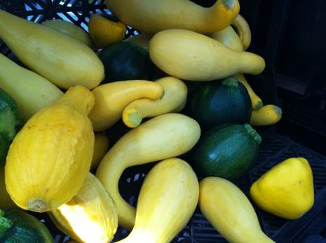 blog-summer squash