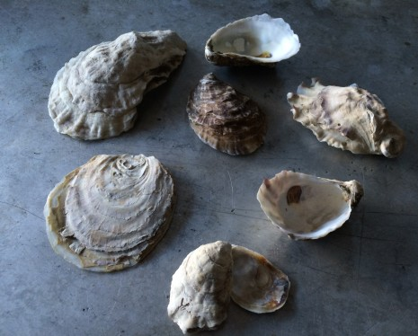 blog-oysters2