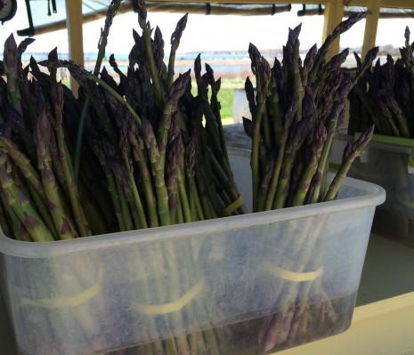 blog-asparagus2015