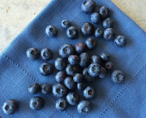 blog-blueberries 2015