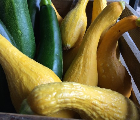 blog-pasta w: summer squash