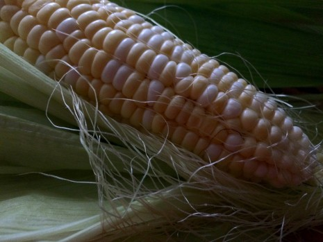 blog-sweet corn5