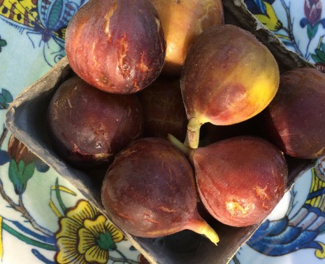 blog-fresh figs